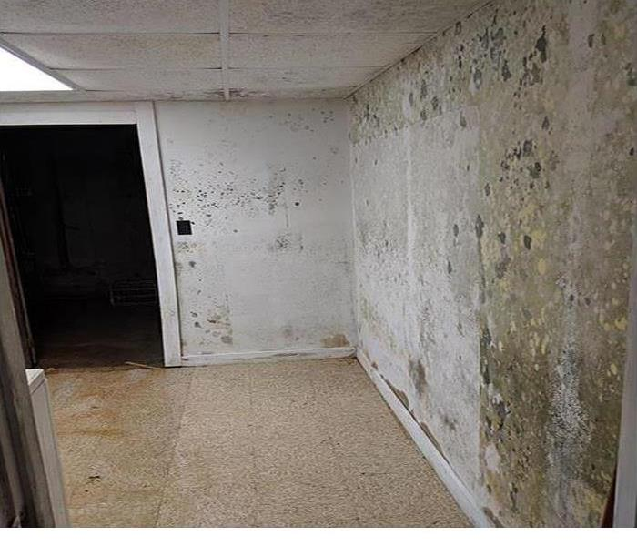Mold covering a wall in this room